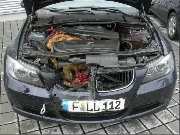 Funny Deer Car Accident